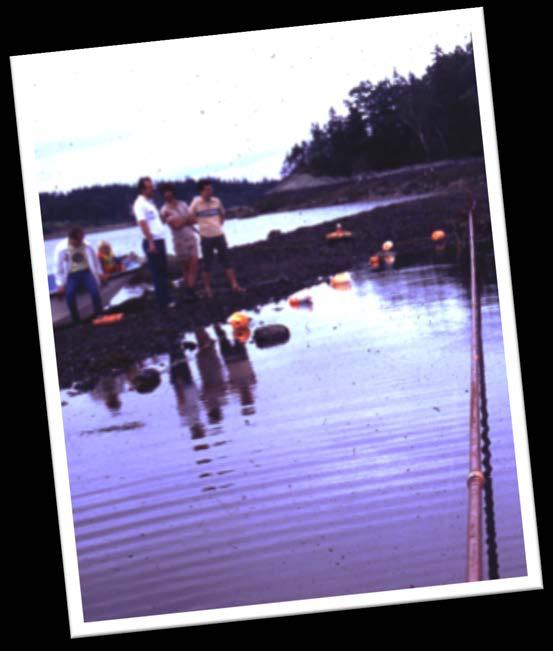 MY FIRST EXPERIENCE WITH UROP STUDENTS VIV 1975 4 to 6 week long field research projects at Castine, Maine UROP students and grad students, working together Late nights, up