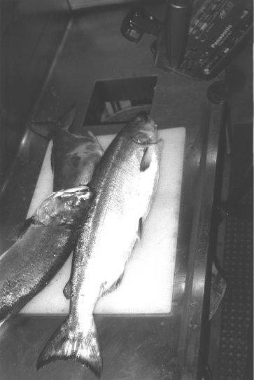 Example classifying fish: fish roll down a conveyer belt camera takes a picture goal: is this a salmon or a seabass? Q: what is X?