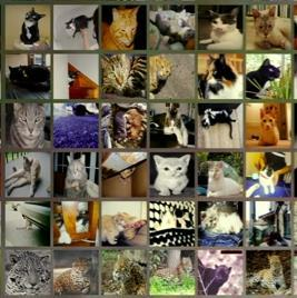 DEEP LEARNING THE CAT PROBLEM Extracting image features of a cat but