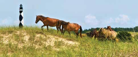Carolyn Temple, Coastal Image Photography Wild horses inhabit Shackleford Banks at Cape Lookout National Seashore.