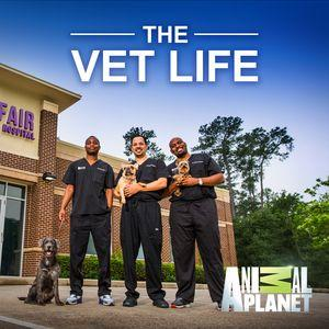 Every year Tuskegee University College of Veterinary Medicine students make their summer pilgrimage to the