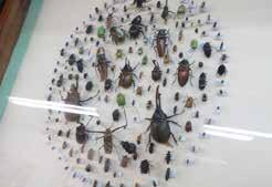 DESCUBRIENDO standing out LA UNAH unah Entomology Museum The Entomology Museum was founded in 1985 through teachers and students efforts of the School of Biology (AEBIH), the rector of the University